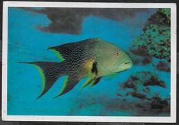 MAR ROSSO - FAUNA TIPICA - VIAGGIATA 1995 FRANCOBOLLO ASPORTATO - Pesci E Crostacei