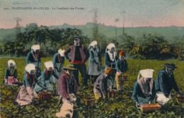 H192 - 29 - PLOUGASTEL-DAOULAS - Finistère - La Cueillette Des Fraises - Plougastel-Daoulas