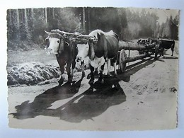 FRANCE - VOSGES - Transport De Grumes - 1959 - Francia
