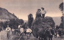 15 - Cantal - En Auvergne - La Fenaison - Agriculture - Attelage De Boeufs - Zonder Classificatie
