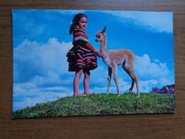 Peru / Cusco, Baby Vicuna --> Written - Pérou