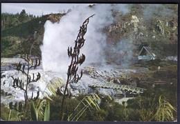 New Zealand / Pohutu Geyser - Whakarewarewa, Rotorua - New Zealand