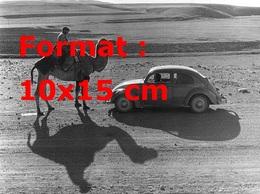 Reproduction D'une Photographie Ancienne D'une Coccinelle VW Dans Le Désert Devant Un Chameau - Reproductions