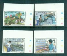 Montserrat 1985 Cotton Industry IMPERF Pairs MUH Lot68591 - Montserrat