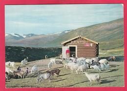Modern Post Card Of Lake Øvre Sjodalsvatn,Norway ,B27. - Norway