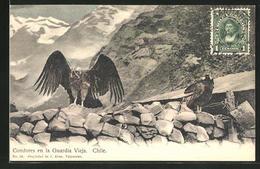 AK Chile, Condores En La Guardia Vieja - Chile