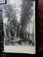 19807) INDIA MADRAS A COCONUT GROVE NON VIAGGIATA MA SCRITTA 1907 - India
