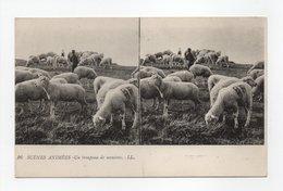 - CPA STEREOSCOPIQUES - SCENES ANIMEES - Un Troupeau De Moutons - Edions Lévy N° 16 - - Stereoscope Cards