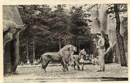 LION(ZOO DE VINCENNES) - Leones