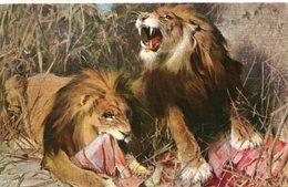 LION(LAPINA 122) - Lions