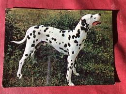 Hond. Chien.  Hund. Dog - Chiens