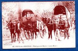 Landes -  Attelage De Mules - France