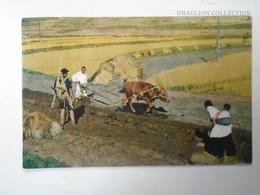 D161596  South Korea - Ploughing - 1963  To  Restaurant Zum Sternen Würenlingen Switzerland - Corea Del Sud