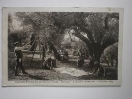 83 Toulon (environs), Cueillette D'olives, Maison Pothonnier (4811) - Toulon