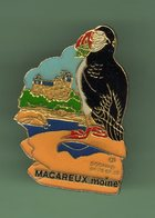 MACAREUX MOINE *** 0085 - Animales