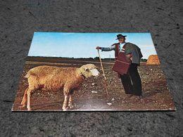 VINTAGE  POSTCARD PORTUGAL - ALENTEJO - PASTOR W/ SHEEP UNUSED - Portugal