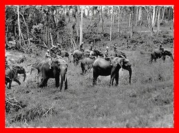CPSM/gf  Le Congo D'aujourd'hui, Station De Domestication D'éléphants, Animé...CO1633 - Olifanten