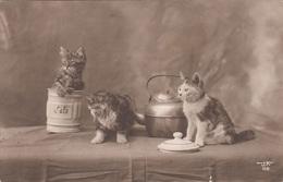 3 Katzen - Künstlerkarte Mit 5 Gro + Sonderstempel Kinderfreunde 1953, Karte Eingerissen - Katzen