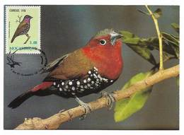 Mozambique Carte Maximum Sénégali Enflammé Hypargos Niveoguttatus Oiseau 1978 Red-throated Twinspot Bird Maxicard - Songbirds & Tree Dwellers