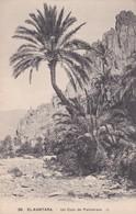 CARTOLINA - POSTCARD - ALGERIA - EL - KANTARA - UN COIN DE PALMERAIE - Algeria