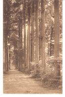 Gaasbeek-Gaesbeek Bij Brussel(Lennik)+/-1910-Kasteel-Château-Dreef Langs De Vijvers-Allée D'arbres Le Long Des Etangs - Lennik