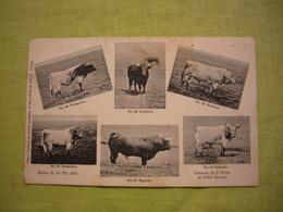CPA Photos Des Taureaux Camargue Course De 1904 Primavéro Morisco Ventanero Sigueno... - Francia