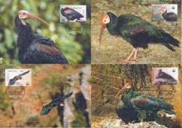 Ref. 134027 * NEW *  - LESOTHO . 2004. WWF. GERONTICUS CALVUS. WWF. GERONTICUS CALVUS - Lesotho (1966-...)