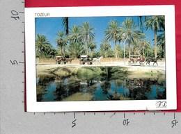 CARTOLINA VG TUNISIA - TOZEUR - La Promenade Dans L'Oasis - 10 X 15 - ANN. 1988 - Tunisia