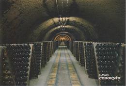 Cartolina - Vino Cavas Codorniu (cantina) - Altre Collezioni