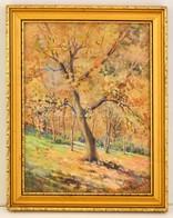 Neogrády Jelzéssel: Őszi Erdő Részlet. Akvarell, Papír, üvegezett Keretben, 36×28 Cm - Altre Collezioni