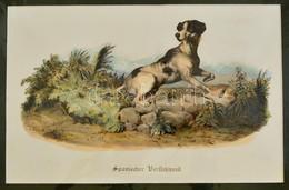 Cca 1850 Spanyol Vadászkutyát ábrázoló Lithográfia 28x18 Cm, Paszpartuban. / Spanish Dog Lithography. - Engravings