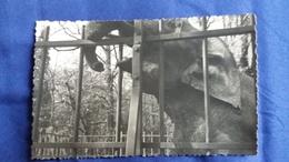 PHOTO D ELEPHANT ZOO ?  FORMAT 13.5 PAR 8.5 CM - Photos