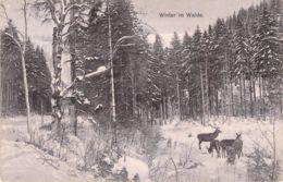 Winter Im Walde 1910 - Photographs
