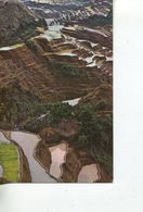 (741) Australia - QANTAS Advett Card For Philippines Visit (rice Terraces) - Mozambique