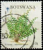 BOTSWANA 1992 - Mi. 539 O, Adiantum Incisum | Ferns | Plants (Flora) - Botswana (1966-...)
