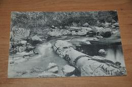 6140- Hoegne, Les Palmiers Petrifies - 1940 - Spa