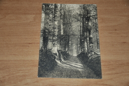 6151- Forêt De Soignes, DREVE DU COMTE - België