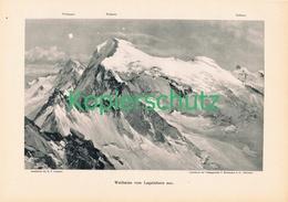 060-2 E.T.Compton Weißmies Laquinhorn Druck 1902 !! - Prints