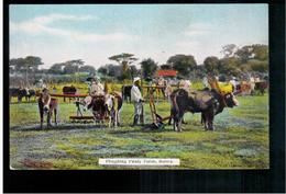 BURMA/ MYANMAR Ploughing Paddy Fields Ca 1910 OLD POSTCARD 2 Scans - Myanmar (Burma)
