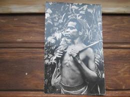Papouasie . Gerrier Montagnard - Papua New Guinea