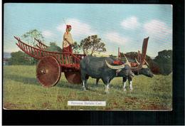 BURMA/ MYANMAR Burmese Buffalo Cart Ca 1920 OLD POSTCARD 2 Scans - Myanmar (Burma)