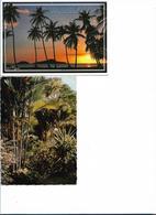 GUADELOUPE CAPESTERRE LOT DE 2 CARTES COUCHER DE SOLEIL VEGETATION TROPICALE - Guadeloupe