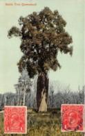 Australie / 58 - Queensland - Bottle Tree - Belle Oblitération - Autres