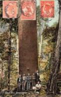 Australie / 59 - Queensland - Kauri Pine - Belle Oblitération - Autres