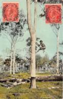 Australie / 80 - Queensland - Tree Climbing - Belle Oblitération - Autres