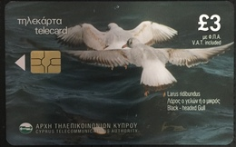 Paco \ CIPRO \ 0501CY (b) \ Larus Ridibundus \ Usata - Cyprus