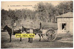 40  Landes Gourbera  Près  Dax  Au  Pays  Landais   Attelages   De  Mulets   H. Berot  Meunier     Paypal Gratuit - Postcards