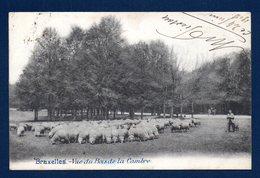 Bruxelles. Vue Du Bois De La Cambre. Berger Et Ses Moutons. 1902 - Forests, Parks