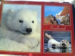 NORGE NORVEGE - Svalbard  FOCA    VOLPE   ORSO BIANCO STAMP TIMBRE SELO 9 GX5728 - Norvegia
