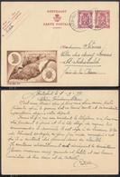 Publibel 812 - 65C - Thématique Pomme De Terre, Doryphore (6G23184) DC0685 - Publibels